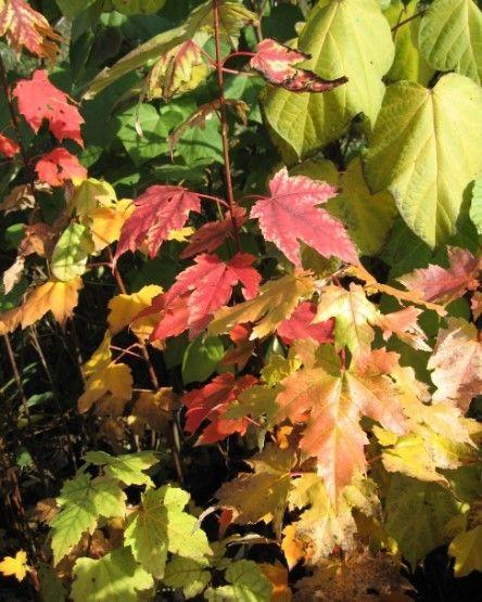 Barwa liści - igieł
