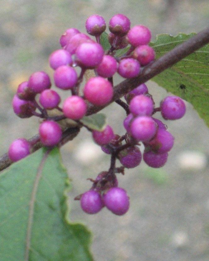 Dekoracyjne owoce