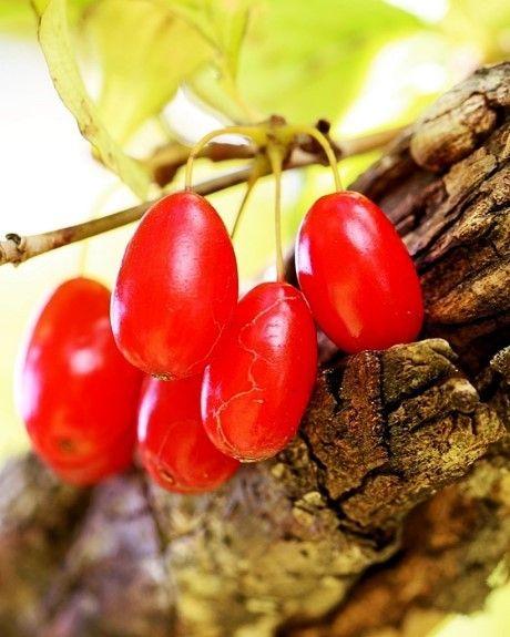 Jadalne owoce nietypowe