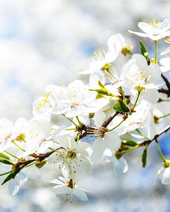 Kwitnące