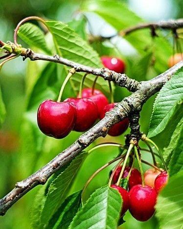 Owoce na przetwory