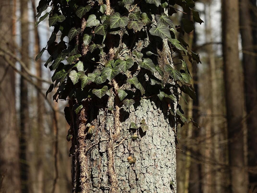 lasoterapia przytulanie drzew