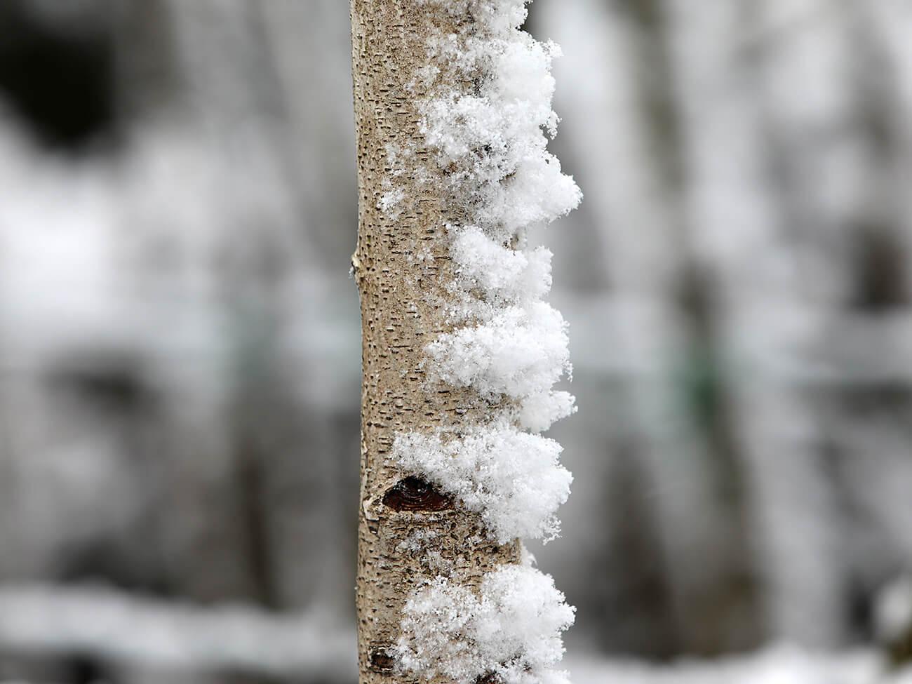 szkółka roślin konieczko zima