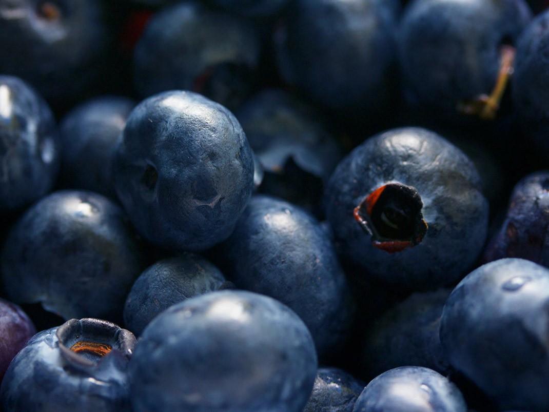 borówka wysoka amerykańska owoce