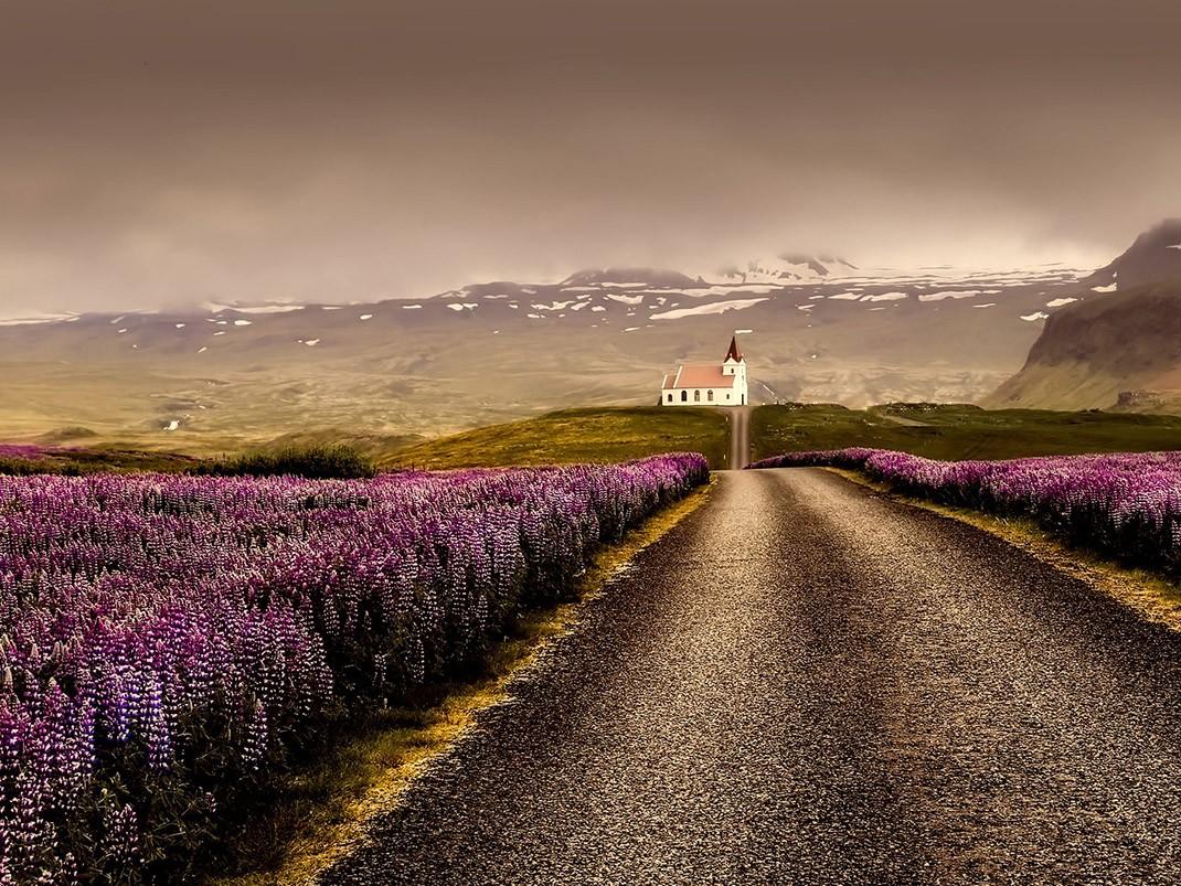 krajobraz islandia wrzosy