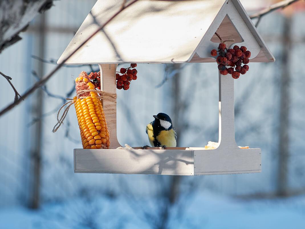 Dokarmianie ptaków - styczeń w ogrodzie