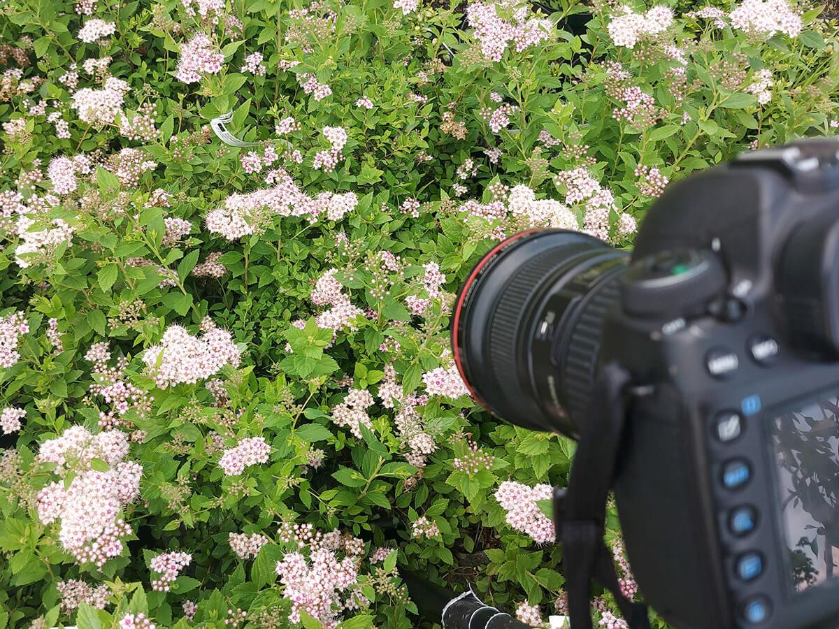 fotografowanie przyrody