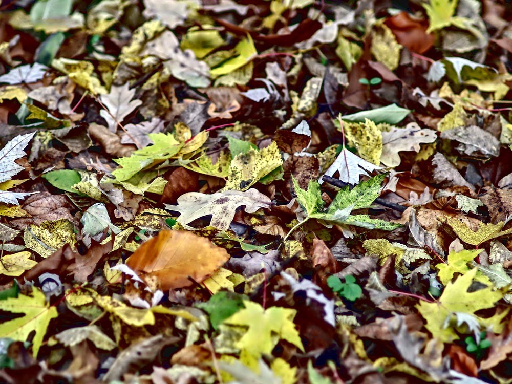 ściółka leśna liście